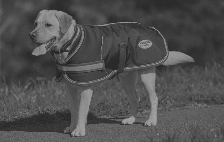 Weatherbeeta Dogs Website